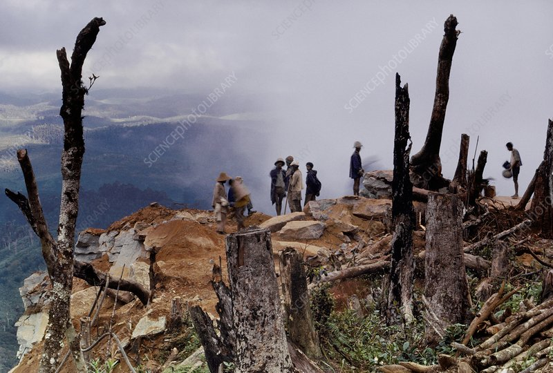 Loggers at clearcut, Eastern Madagascar