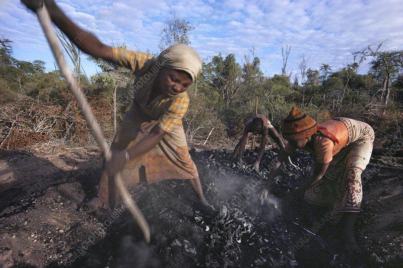 Charcoalers raking charred wood