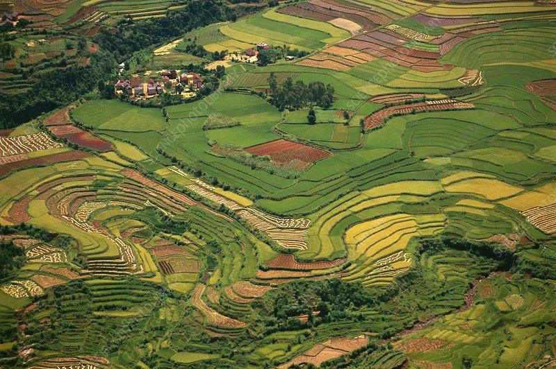 Terraced rice paddies, an aerial view