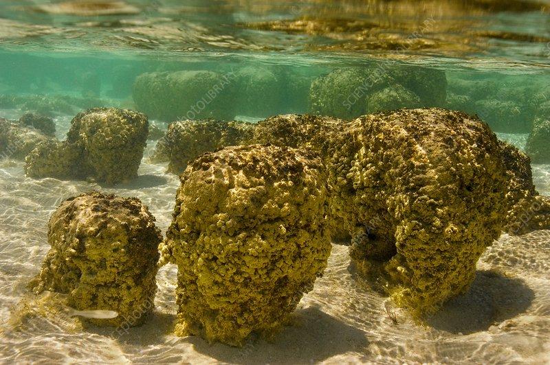 Stromatolite, rock forms, cyanobacteria