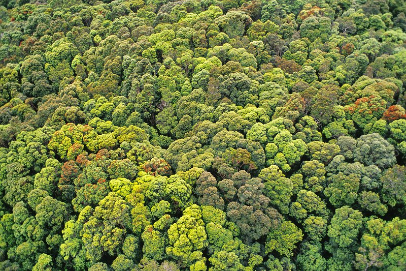 Aerial view of the forest canopy