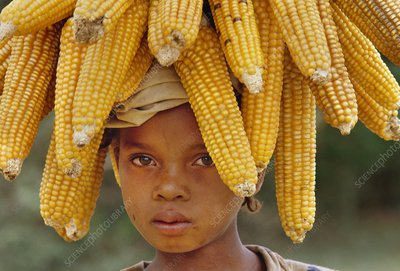 Child carrying harvest maize, Madagascar