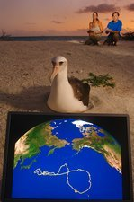 Satellite track laysan albatross journey