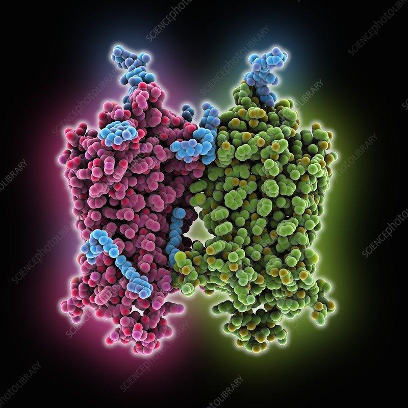 Opsin molecule