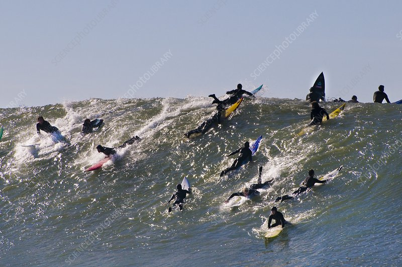 Surfers riding wave, California