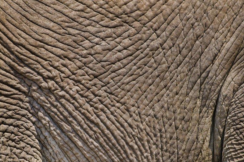 Elephant skin, Etosha, Namibia