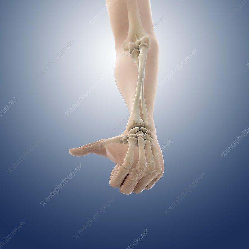 Pronation of the forearm, artwork