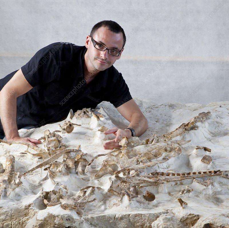 Crocodilian fossil research