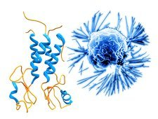Breast cancer protein and cancer cell