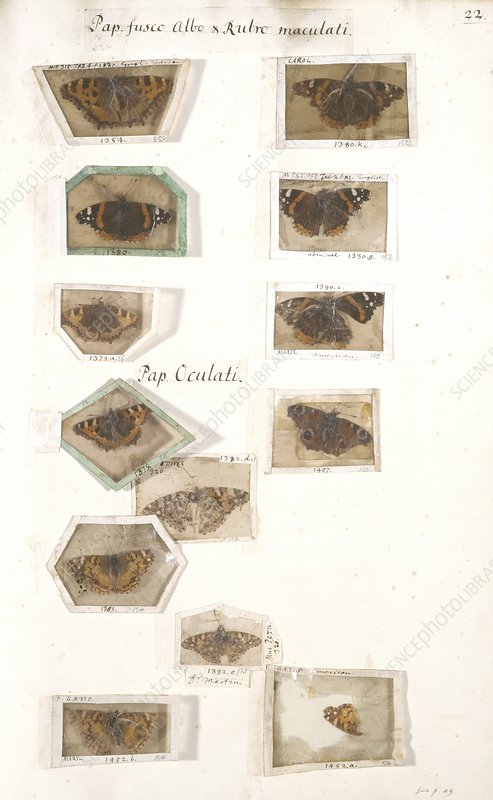 Petiver's insect collection, 17th century