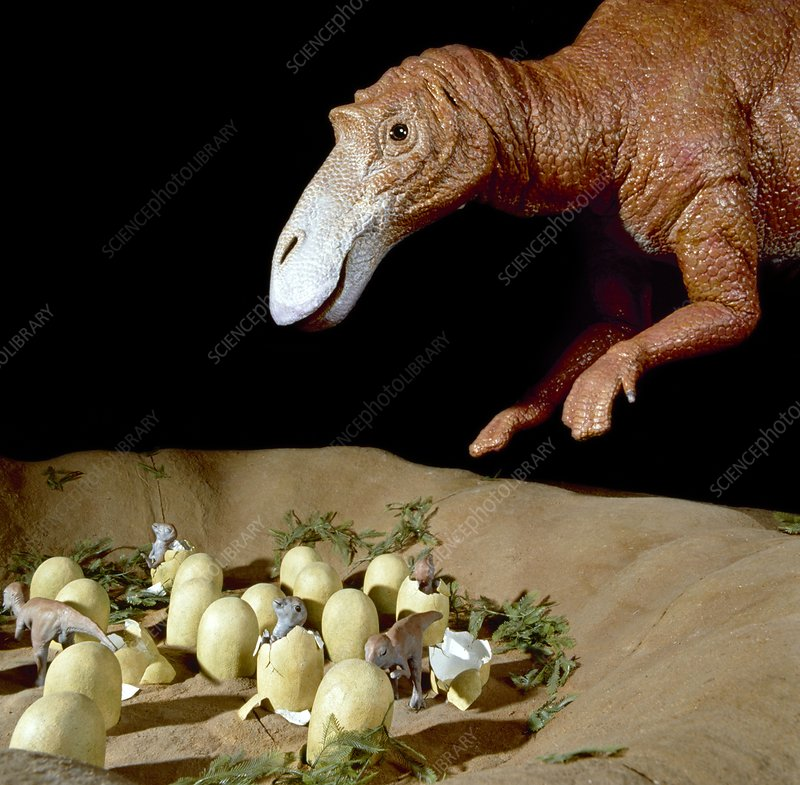 Dinosaur Nests Exploring Science And Nature