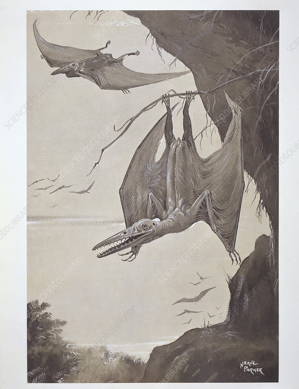 Pterodactyls, 20th-century artwork