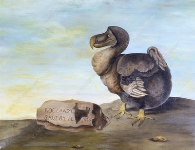 Dodo, 1626 artwork