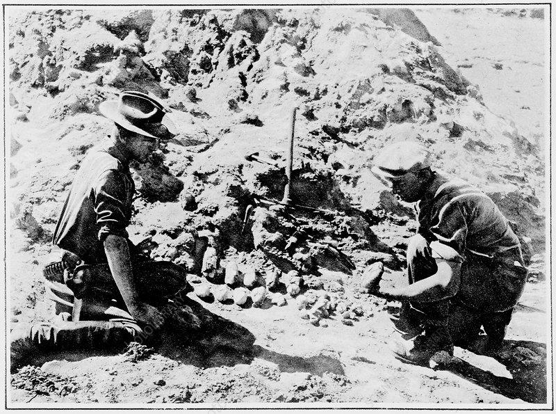 Dinosaur egg fossil excavation, 1925
