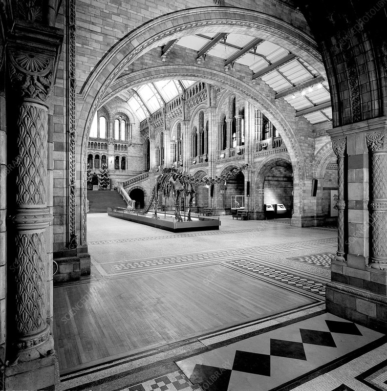 Natural History Museum's Central Hall