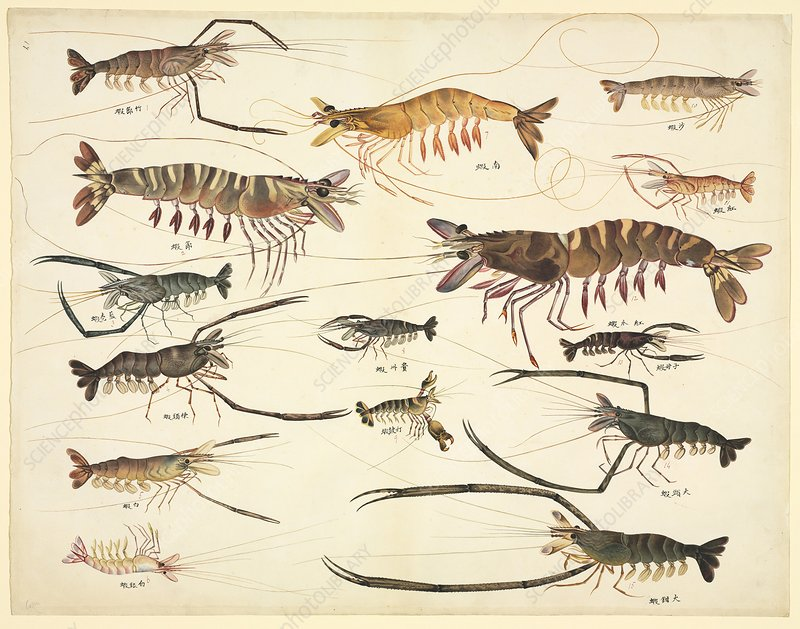 Lobsters and crayfish, 19th century