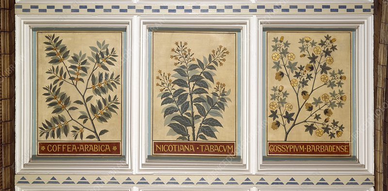 Ceiling panels: coffee, tobacco, cotton
