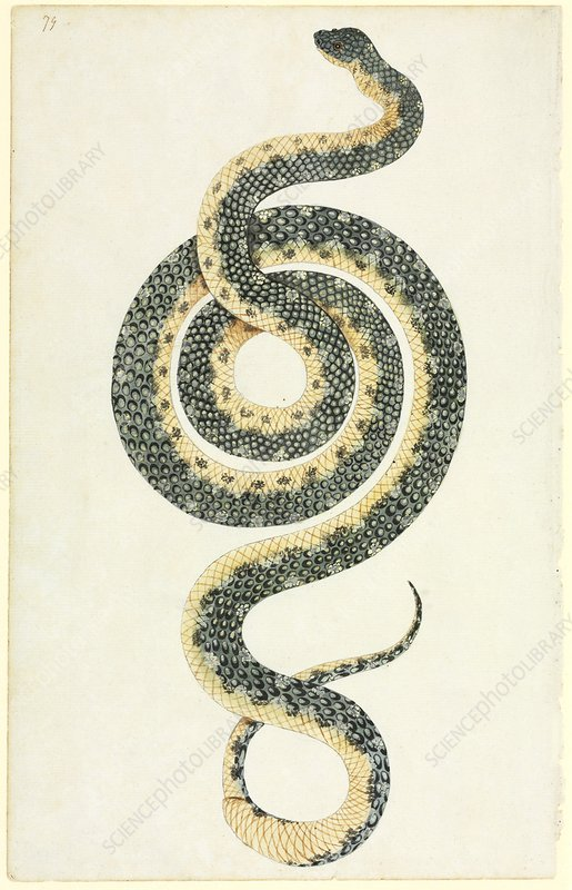 Diamond python, 18th century
