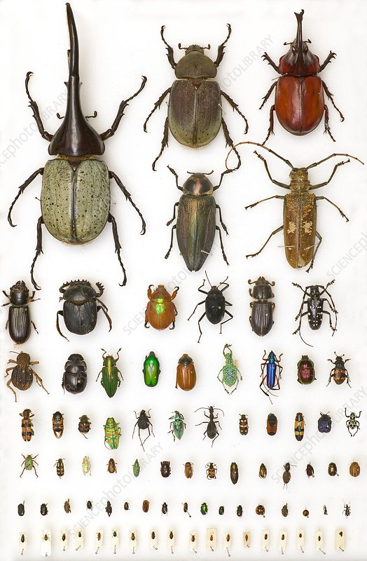 Entomology collection, mounted specimens