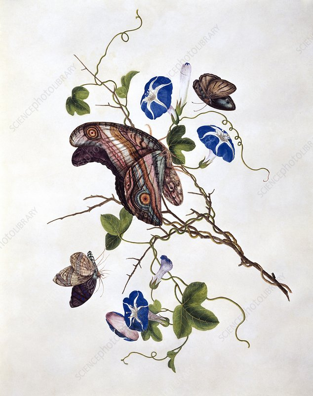 Butterflies and flowers, 19th century