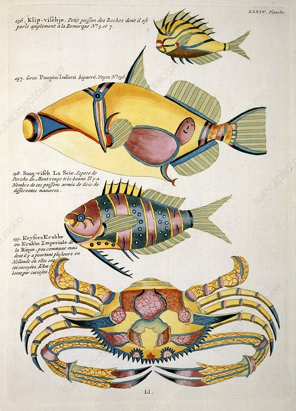 Fish artworks from Renard, 18th century