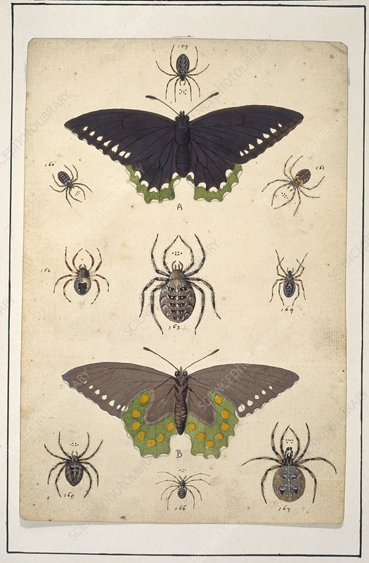 Spiders and butterflies, artwork