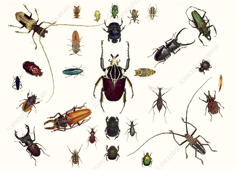 Various beetle specimens