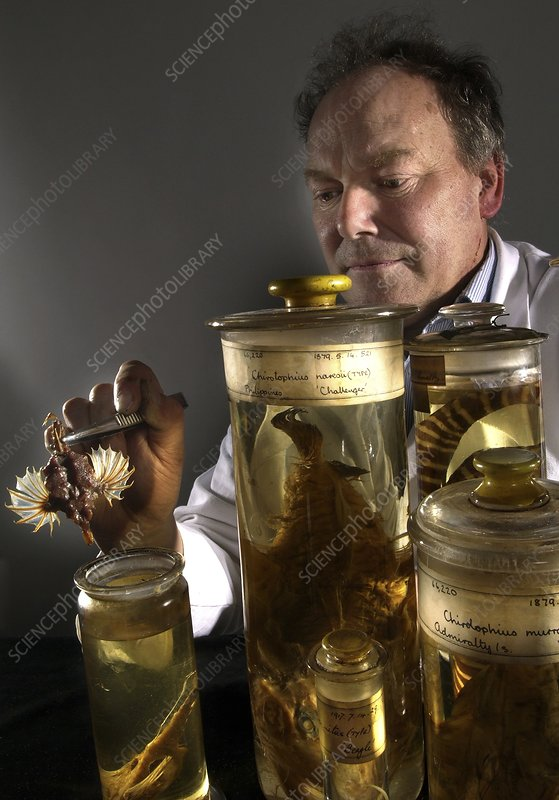 Curator with fish specimens