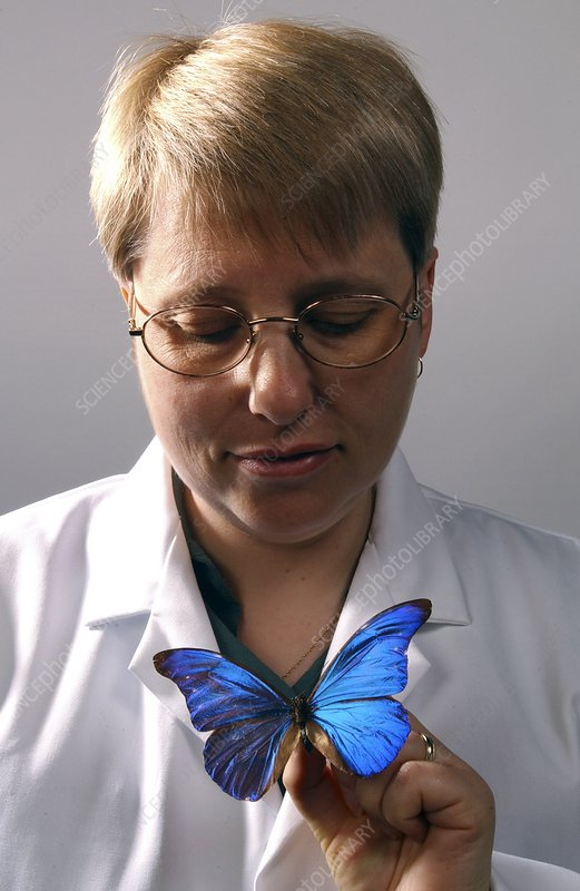 Curator with butterfly specimen