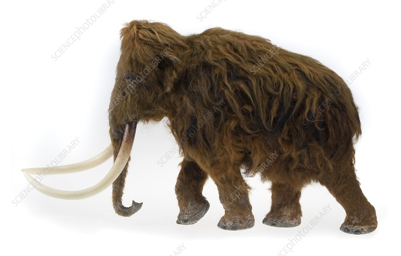 Model of the Ilford Mammoth