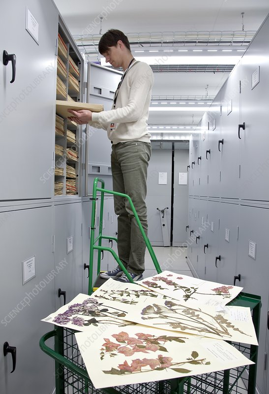 General herbarium darwin centre uk stock image c016 6191 science photo library - Model herbarium ...