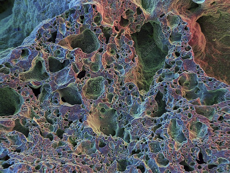 Volcanic ash, SEM - Stock Image C016/7039 - Science Photo Library