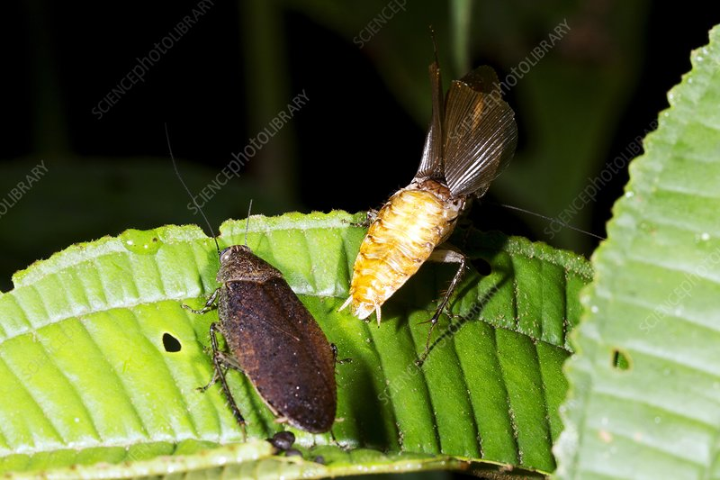 a courting to nature in reproduction In polygynous insect species, male reproductive success is directly related to lifetime mating success however, the costs for males of sexual activities such as courting, signaling, and mating are largely unknown.