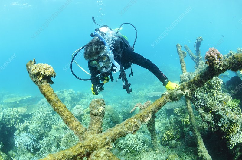 Biorock reef restoration, Indonesia