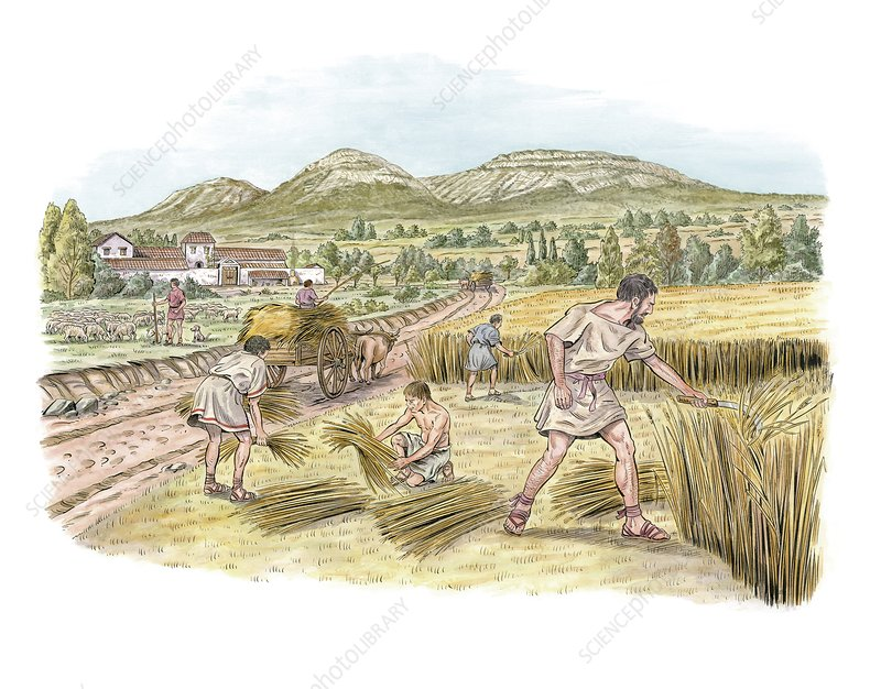 an introduction to the history of agriculture in roman empire Rome's contact with carthage, greece, and the hellenistic east in the  the  introduction of new crops transformed private farming into a new.