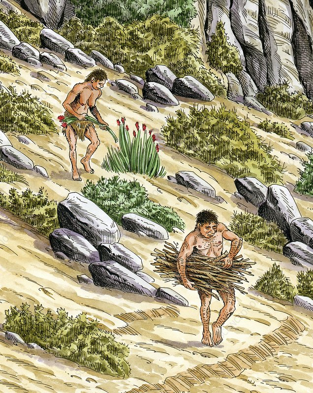 Palaeolithic plant gathering, artwork