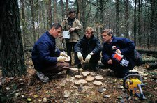 Chernobyl disaster environmental research
