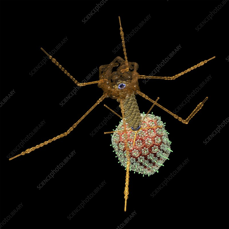 Bacteriophage T4, artwork
