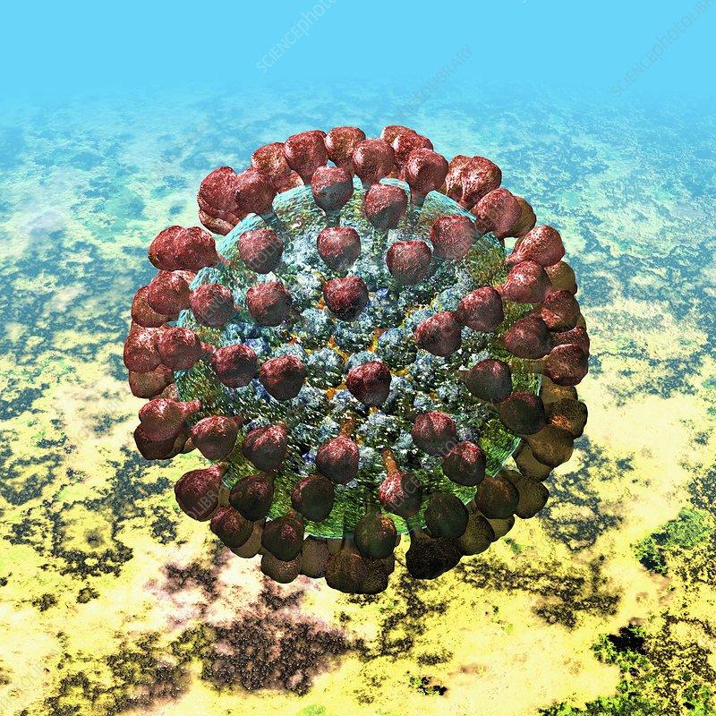 Lassa virus particle, artwork
