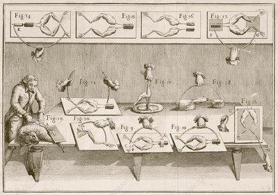 Galvani's electricity experiments, 1780s
