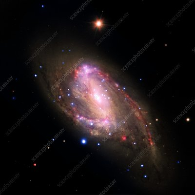 Spiral galaxy NGC 3627, composite image