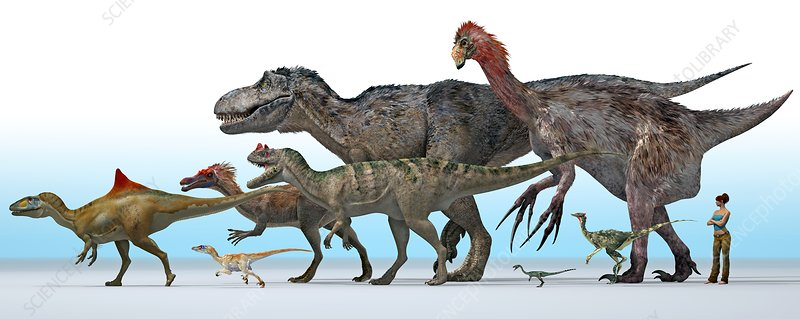 Theropod dinosaurs, artwork