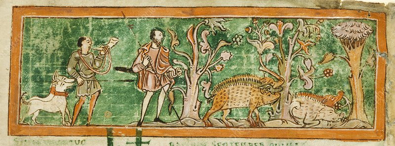 Hogs and hunting dogs, 11th century