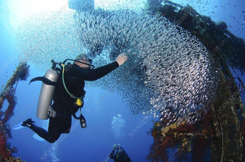 Diving at aqaba red sea stock image c017 1252 for Aqaba dive