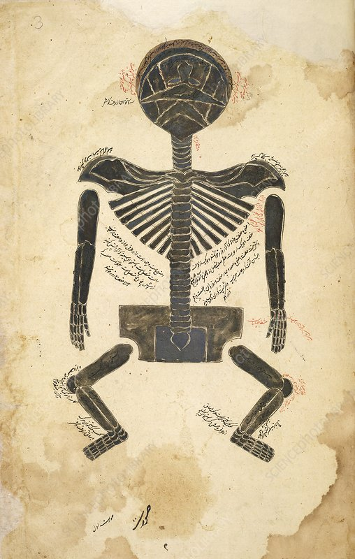 Skeleton anatomy, Persia, 17th century
