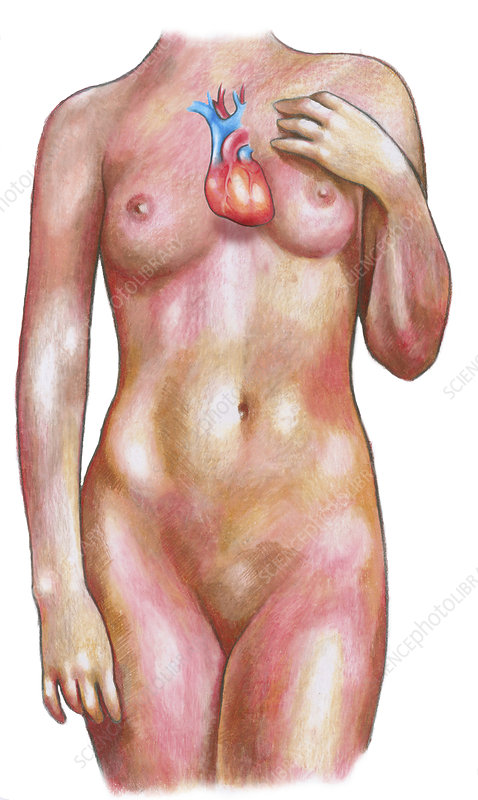 Female Body With Heart