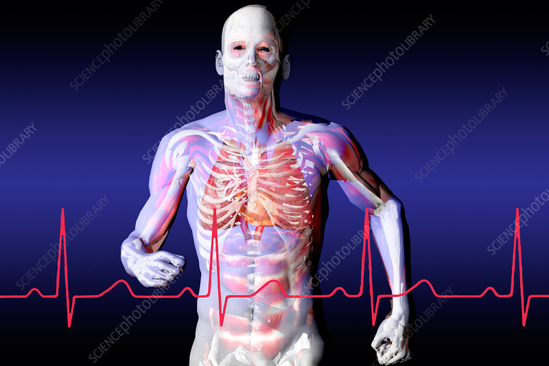 Anatomical View of Jogger with EKG