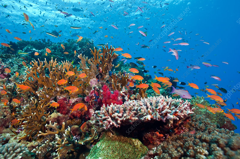 Coral Reef Biodiversity