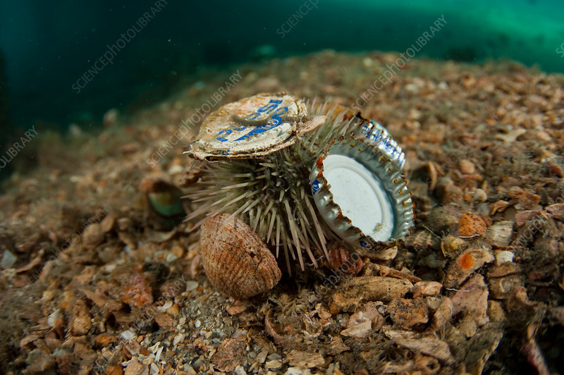 Sea Urchin with Garbage