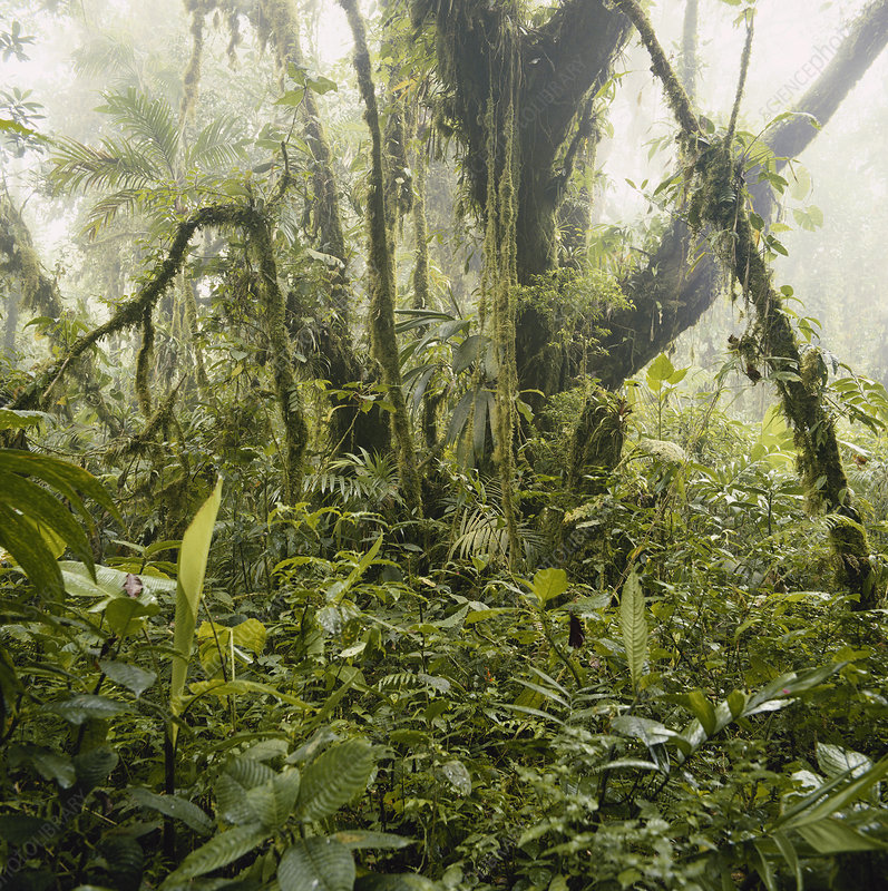 Misty Cloud Forest